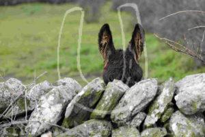 foto-mondelo-orejas-burro-camiseta-hermano-asno